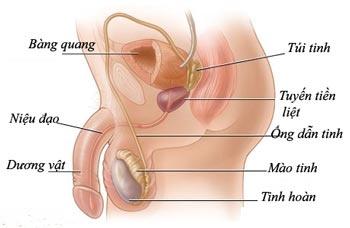 bệnh xuất tinh sớm có thể do viêm niệu đạo gây ra