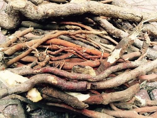 rễ cau treo chữa xuất tinh sớm3