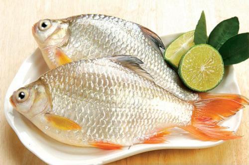 cá diếc chữa xuất tinh sớm