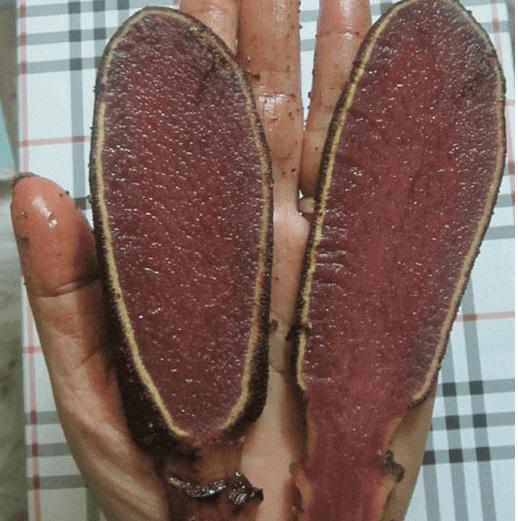 Nấm ngọc cẩu tươi
