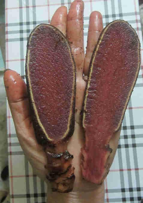 nấm ngọc cẩu có mấy loại1
