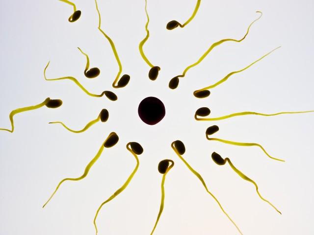 Xuất tinh sớm làm tinh trùng yếu