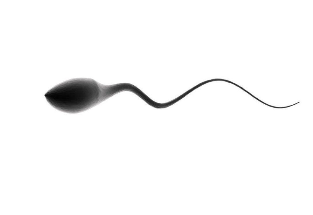 Mỗi giây có từ 1000 - 5000 tế bào tinh trùng mới được sản sinh